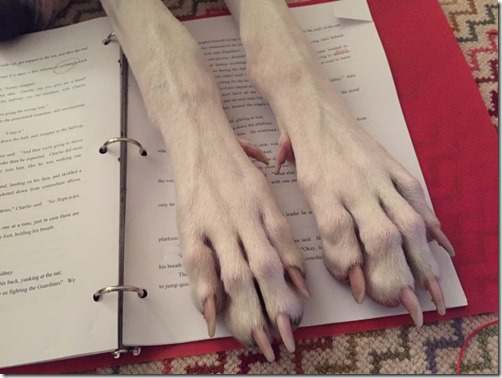 Buddy Volume 3, Buddy's paws over my manuscript